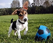 jackdog_1.jpg